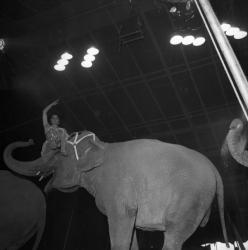 [Une femme en équilibre sur la tête de l'éléphant]