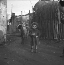 Une enfant et deux moutons