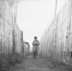 [Portrait d'un enfant concentré sur un chemin bordé de palissades]