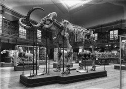 [La Grande salle du Muséum d'histoire naturelle de Lyon, dit musée Guimet]