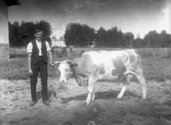 [Homme tenant une vache]