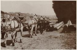[Quai de la Tête-d'Or : des chevaux tirent le bois arrivé par flottage sur le Rhône]