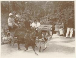 [La promenade des enfants dans la voiture aux chèvres, à Charbonnières-les-Bains, autour du Casino]