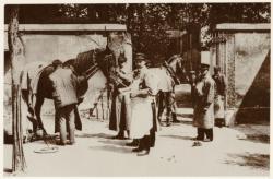 [Examen des chevaux à l'école vétérinaire de Lyon-Vaise, au début du XXe siècle]