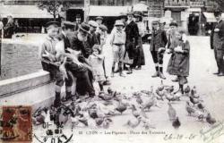 Lyon : Les Pigeons ; Place des Terreaux.