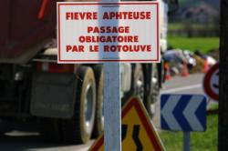 [Saint-Pierre-de-Chandieu : contagion par la fièvre aphteuse]