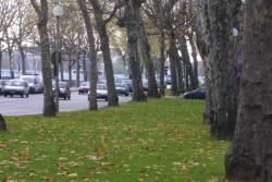 [Les arbres dans la ville]