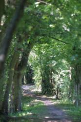 [Sentiers de promenade en bord de Saône dans le Beaujolais]