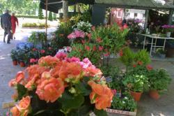 [Fleuriste du groupe lyonnais Interflora, place Maréchal Lyautey]