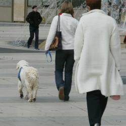 [Les animaux de compagnie en ville]