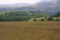 [L'agriculture dans le Rhône]