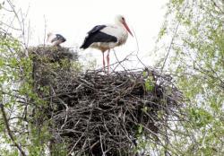 [Parc ornithologique de Villars-les-Dombes]