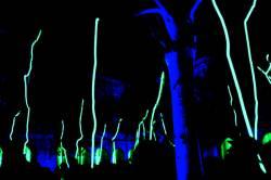 Fête des lumières 2010 : animation dans la cour du Palais Saint-Pierre