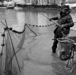 Pêche dans la Dombes 19/36 : Le pêcheur vide l'arvaux...