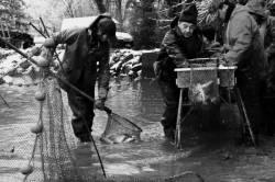 Pêche dans la Dombes 21/36 : Le pêcheur remonte l'arvaux...