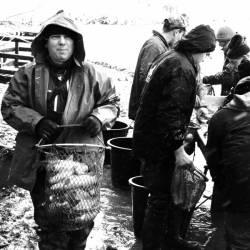 Pêche dans la Dombes 23/36 : Le pêcheur emporte son filochon de poissons...