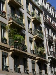 Verdure au balcon