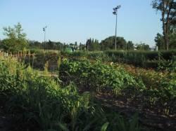 Un parc dédié au jardinage