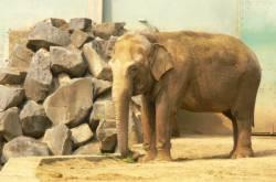 La plaine africaine : éléphant