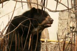 Ours du parc zoologique