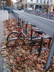 Des vélos pris dans les feuilles rue de la Part-Dieu