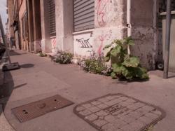 Des fleurs plantées dans le trottoir rue Chalopin