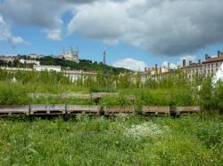 La place Bellecour végétalisée lors de l'animation Nature Capitale, du 17 au 19 juin 2011