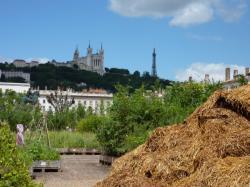 La place Bellecour végétalisée lors de l'animation Nature Capitale du 17 au 19 juin 2011