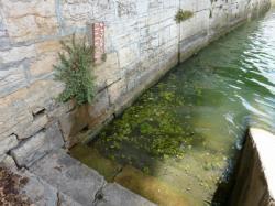 Voies d'accès à la Saône 02/10 : Aujourd'hui, cet escalier est accessible, mais demain ?