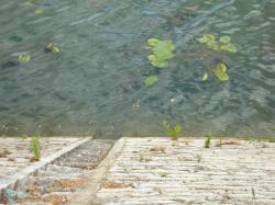 Voies d'accès à la Saône 03/10 : Descente abrupte vers la Saône