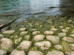 Voies d'accès à la Saône 08/10 : Quelques galets épargnés par l'eau et par la mousse