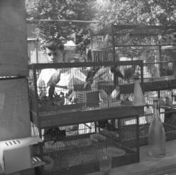 [Enfant observe les oiseaux dans leur cage]
