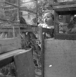 [Une enfant devant des cages contenant des oiseaux ]