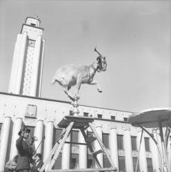 [La chèvre Marguerite en représentation devant la mairie de Villeurbanne]