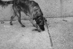 La vie au bord de la Saône 12/17 : Le chien