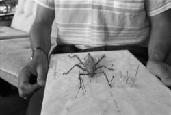[La collection d'insectes de Christian Orsucci]