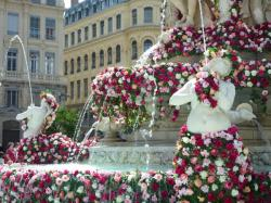 Roses en cascade