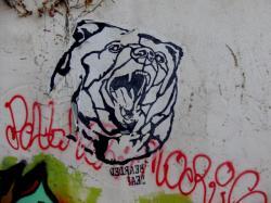 Tête d'ours, rue Claude Pouteau