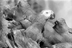 [Les Perroquets du Parc ornithologique de Villars-les-Dombes]