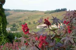 Le Beaujolais, en allant vers le Moulin à Vent