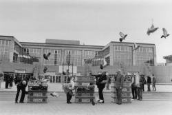 [Foire internationale de Lyon (1986). Lâcher de pigeons par le Cercle colombophile de Lyon]
