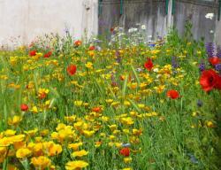 Jardin sauvage