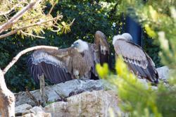 Parc des oiseaux, aigles
