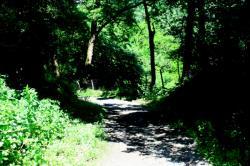 Francheville, chemin de Chalon