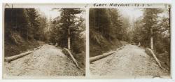 Forêt de Meyriat