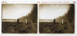 Chalamont, étang des Dombes