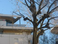 """""""Les arbres de la cour"""""""