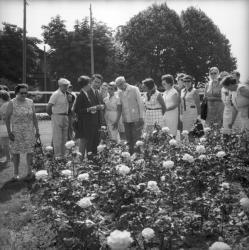 Délégation allemande - les roses Gaujard