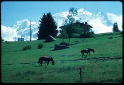 [Le massif du Mont-Blanc depuis Combloux]