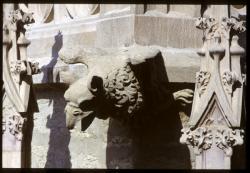 [Gargouille de l'église Saint-Nizier]